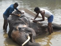 The Heartwarming story of Sunder the elephant